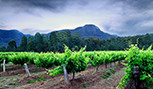 Les vignobles de Hunter Valley